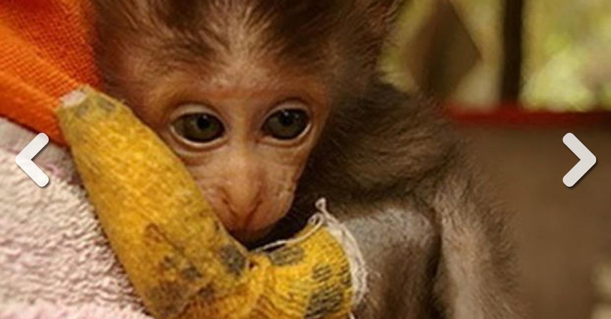 Entdecke 20 Fotos super niedlicher Tiere mit Mini