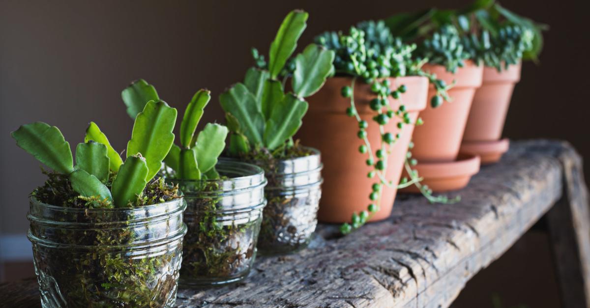 pflanzenfan aber kein gr ner daumen dann sind diese gew chse perfekt f r dich. Black Bedroom Furniture Sets. Home Design Ideas