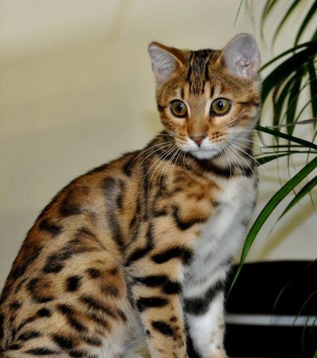 Diese Katzen verzaubern dich mit ihrem einzigartigen Aussehen!
