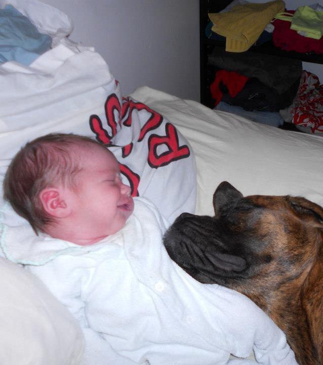 Hunde kuscheln mit Babies