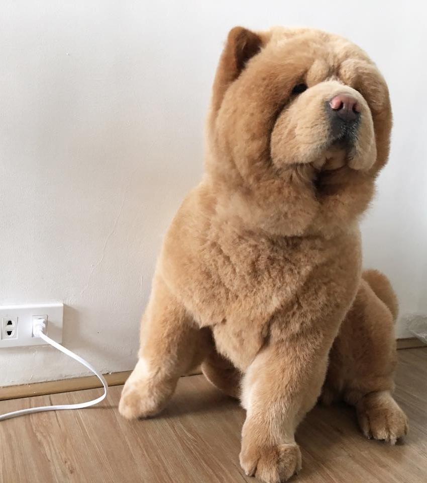Kennt ihr schon Chowder? Er sieht aus wie ein Plüschbär, aber er ist ein ganz Besonderer!