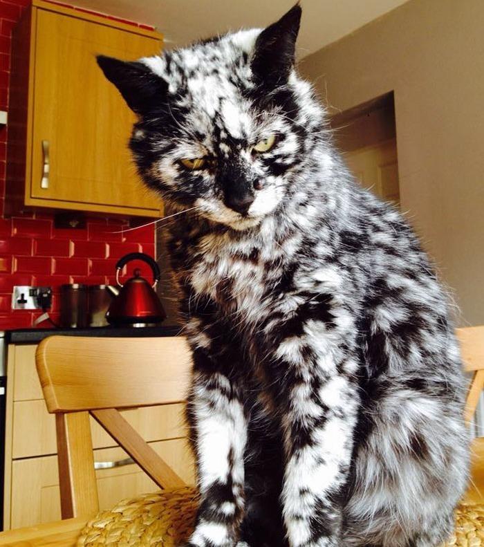 Lernt Scrappy kennen, die Katze mit dem unglaublichen Fell!