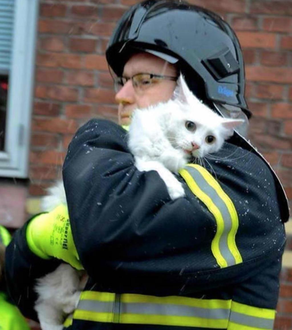 Bewegende Rettungsmomente in Bildern eingefangen! Das Bild mit dem Dackel wird euch zu Tränen rühren!