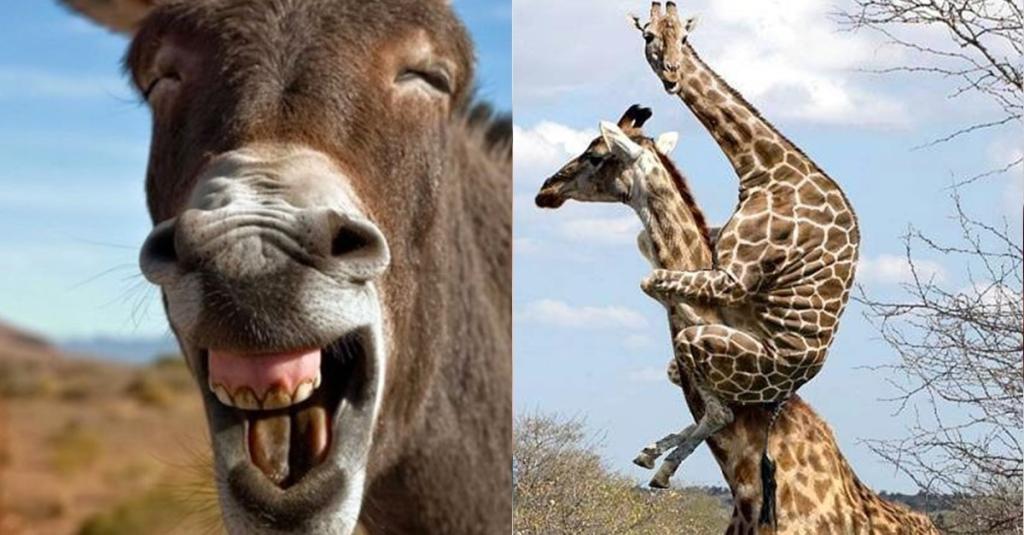 13 lustige Bilder von wilden Tieren in merkwürdigen Situationen