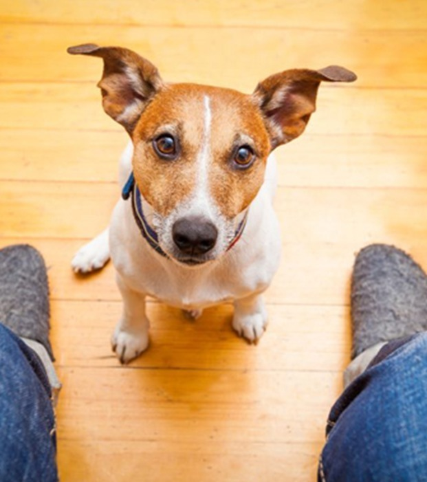 13 häufige Fehler, die Tierliebhaber unbedingt vermeiden sollten