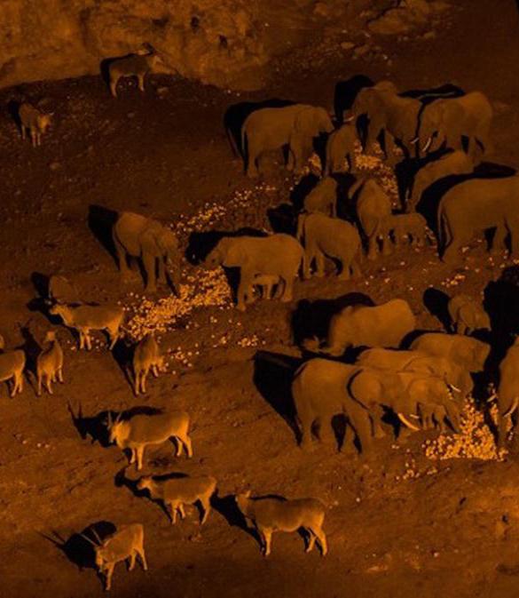 Klimawandel: Seht mit uns, wie schlimm es für Tiere und Natur bereits ist