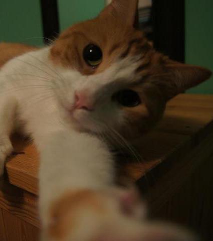 Die genialsten Katzen-Selfies! Das im Bett ist zum Totlachen!