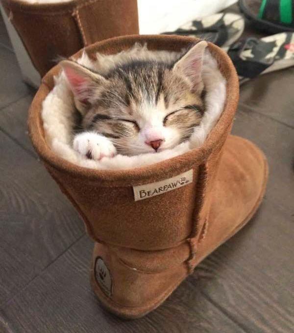 Tiergalerie: Die schönsten Bilder von Katzen, die total verrückt auf Schuhe sind!