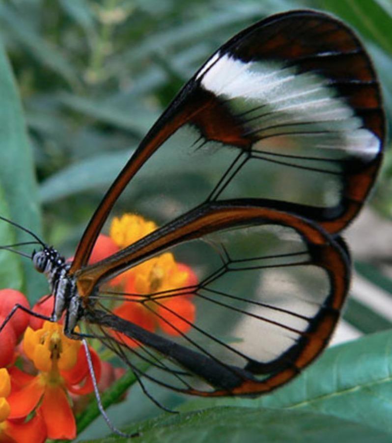 Transparente Tiere: Kaum zu glauben, aber wahr! Der Marienkäfer ist wirklich beeindruckend!