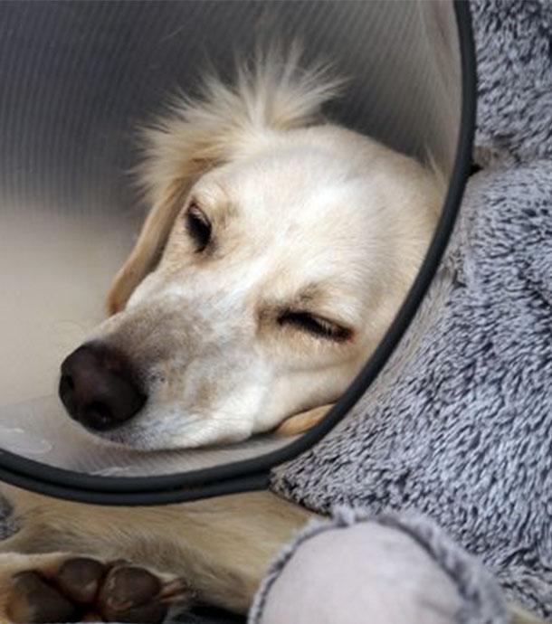 Familie kann Behandlung für Hund nicht zahlen: Tierarzt sorgt mit Reaktion für Empörung!