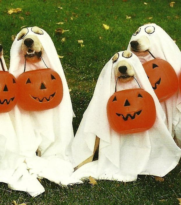 Halloween: 11 Ideen, wie dein Hund bei jeder Party mithalten kann