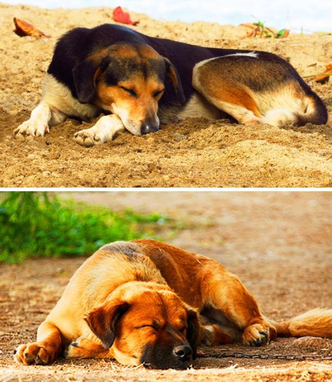 Was die Schlafposition deines Hundes über seinen Charakter und sein Wesen verrät