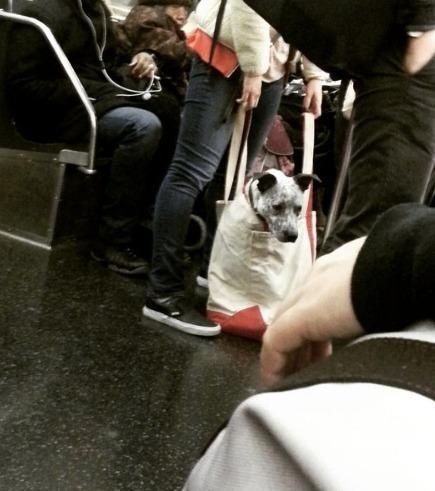 In den New Yorker U-Bahn dürfen Hunde absofort nur noch in Taschen reisen....Der Vierbeiner in der IKEA-Tüte ist bei weitem der Genialste!