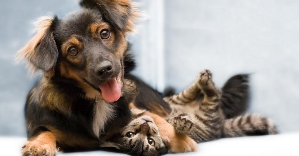 Hund Oder Katze Test