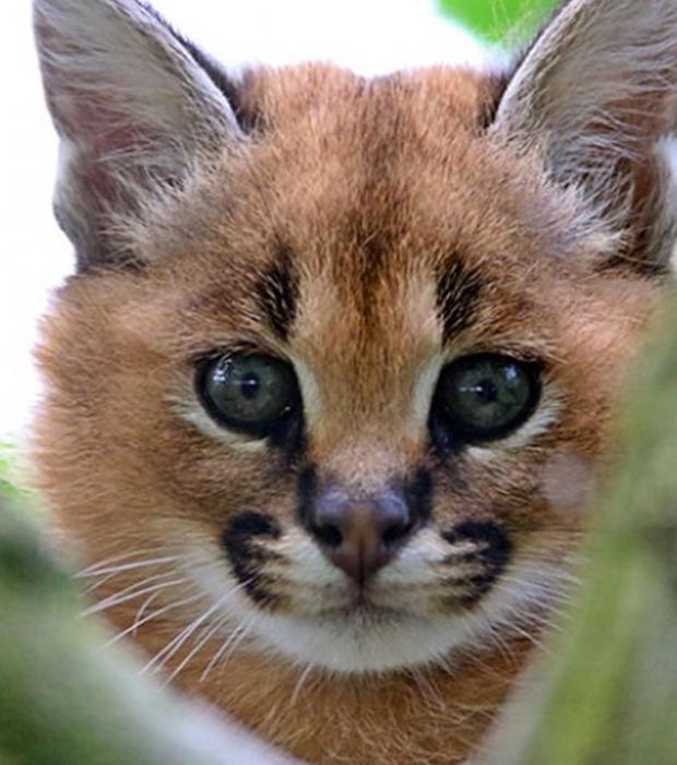 Entdecke mit uns Fotos der schönsten Katze der Welt!