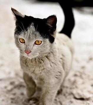 10 Katzen mit einzigartigen Flecken
