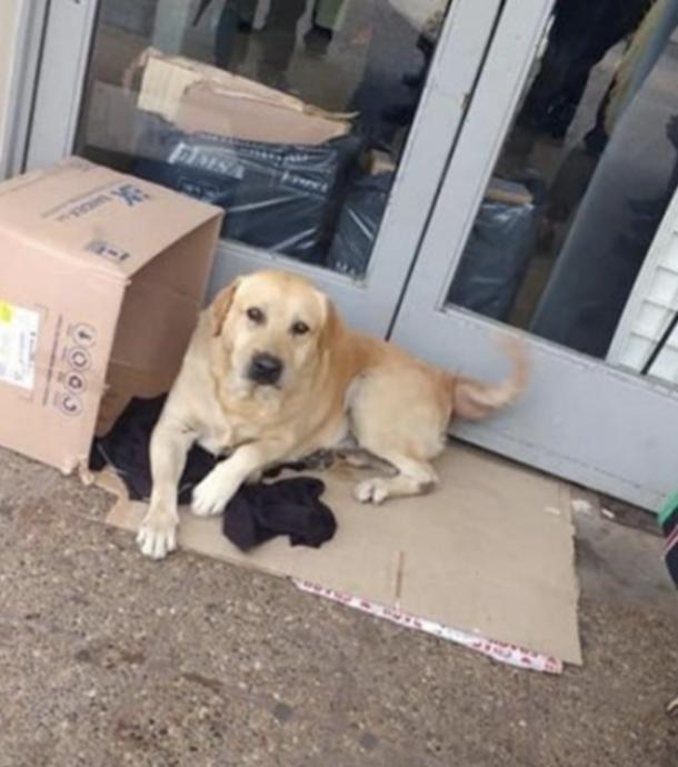 Toto wartet eine Woche lang vor dem Krankenhaus. Der Grund ist herzzerreißend