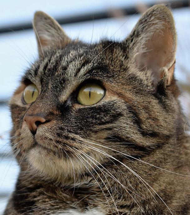Studie: Persönlichkeit von Katzenbesitzer wirkt sich auf Gesundheit der Katze aus