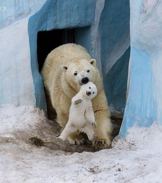 Auch Tiere haben Gefühle: 19 Bilder, die beweisen, wie sehr Tiere ihren Nachwuchs lieben