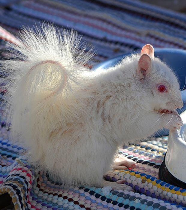 Albinos: 18 prächtige Tiere, denen die Natur Farbe versagt hat
