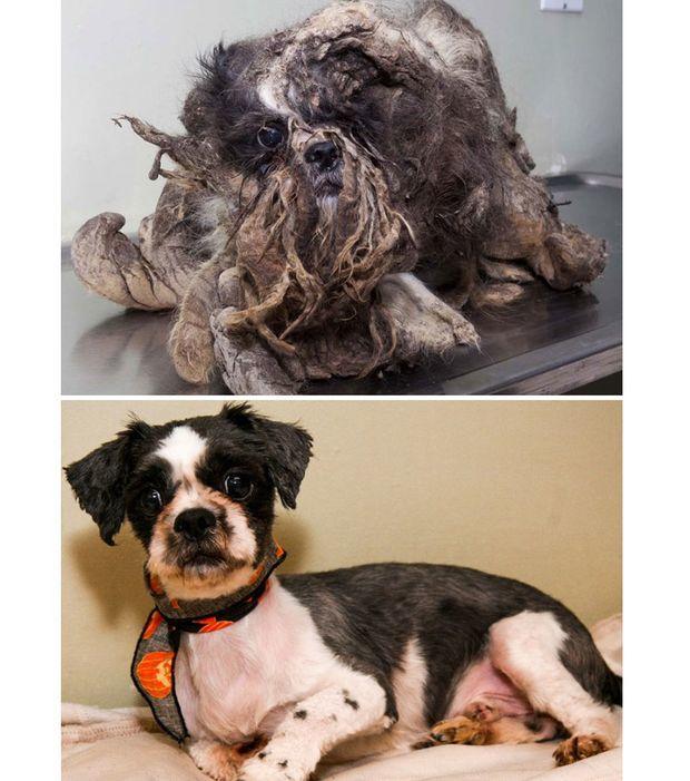 Hund bevor und nachdem sie adoptiert wurden