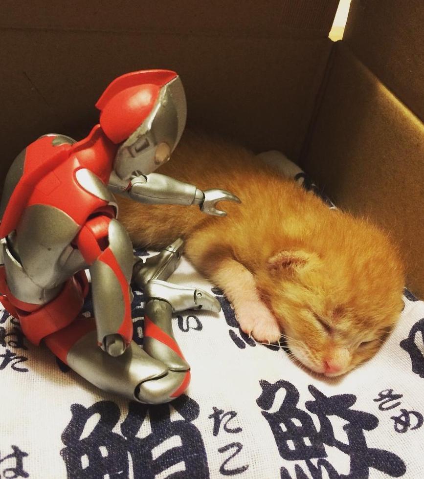 Dieses rote Kätzchen hatte einen echten Minisuperhelden an seiner Seite!