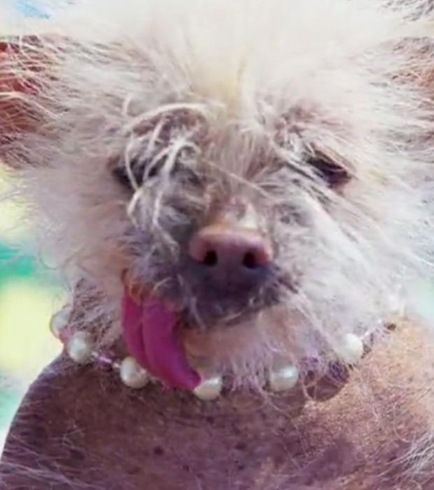 Die hässlichsten Haustiere der Welt