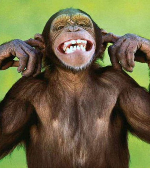 Eine Rangliste der zehn intelligentesten Tiere