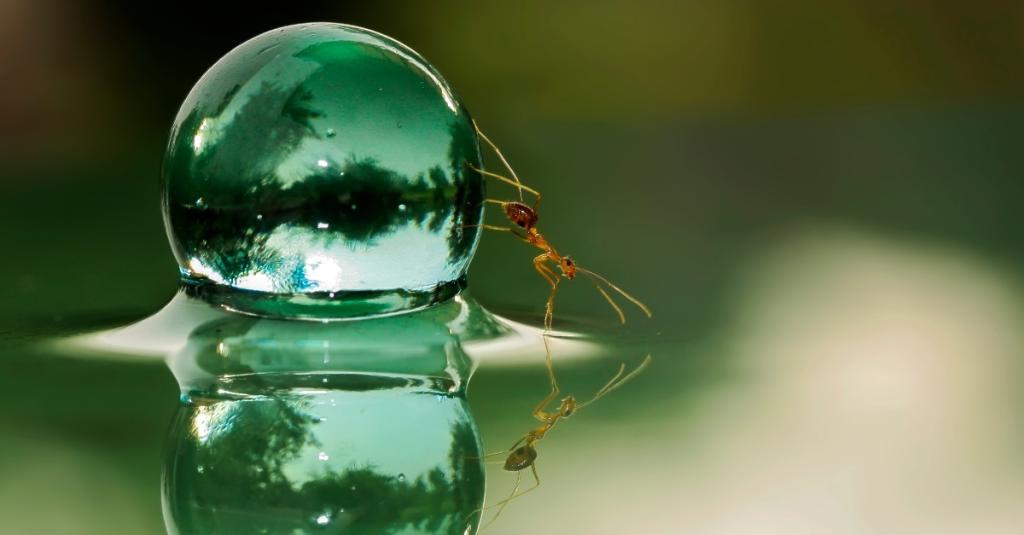 Sie züchten und melken andere Tiere: 20 verrückte Ameisen-Facts