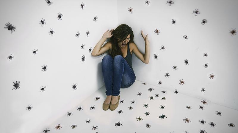Eine Spinne im Traum – was hat das zu bedeuten?