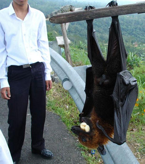Unglaublich große Tiere, die Fotografen gefunden haben
