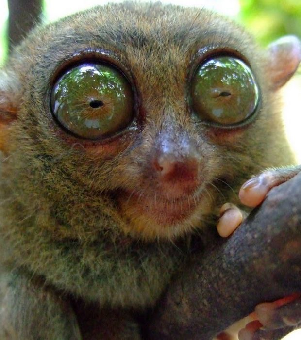 Fantastische Tiere mit faszinierenden Augen