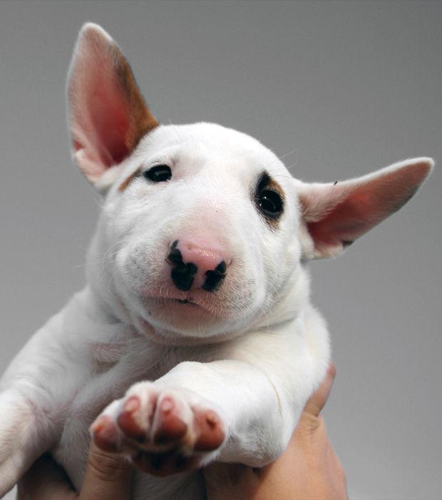 Die Sch 246 Nsten Hunderassen Der Welt