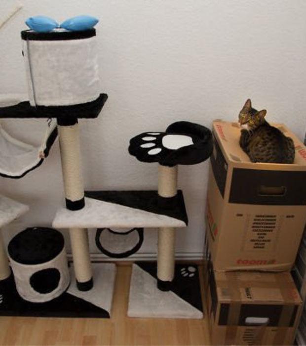 Katzenlogik: Entdeckt, wie Katzen wirklich ticken