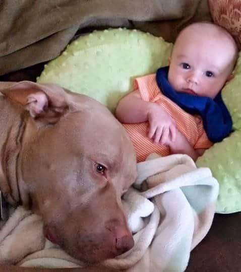 Hunde, die auf Babys aufpassen