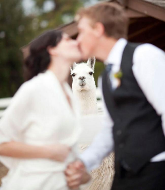 Genial, dramatisch oder witzig: Das sind die besten Hochzeitsfotos aller Zeiten!