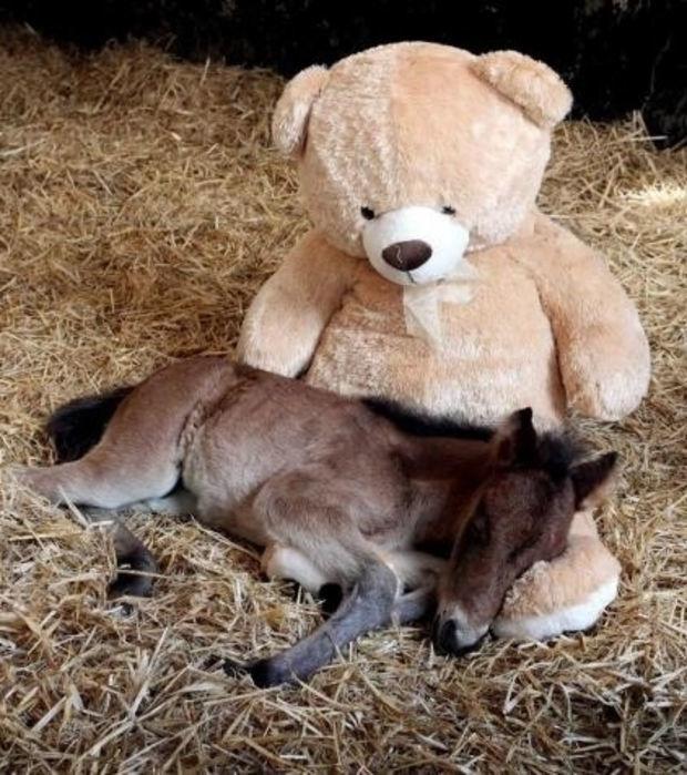 11 Fotos von Pferden... eines unwirklicher als das andere