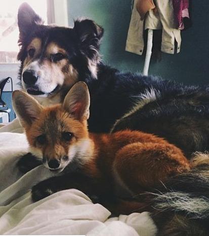 Tierische Freunde: Diese Paare sind einfach unzertrennlich!