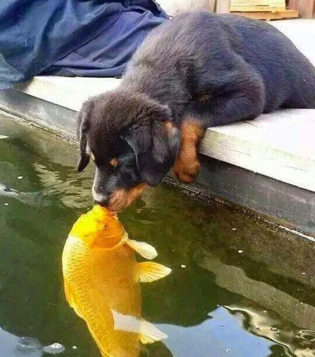 Ungewöhnliche und unerwartete Tierfreundschaften