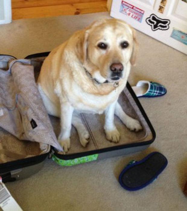 15 Katzen und Hunde ohne die ihr nicht in den Urlaub könnt