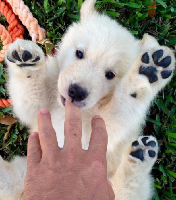 Na was ist das kleine Fellknäuel wirklich? Ein Welpe oder ein Eisbärenjunges?