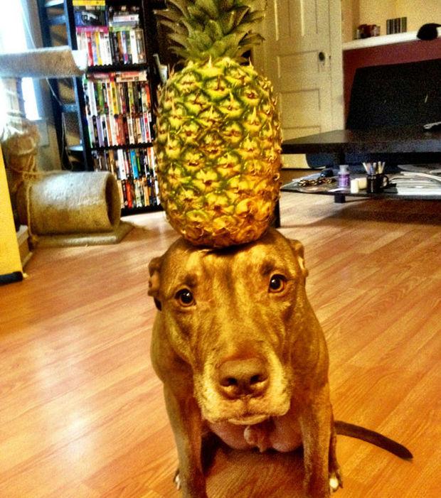 Scout ist ein duldsamer Hund... er lässt alles mit sich machen und erträgt jede Kopfbedeckung, ohne mit der Wimper zu zucken!