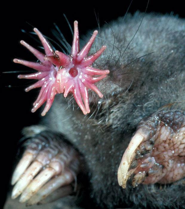 Die verrücktesten und ungewöhnlichsten Tiere der Welt