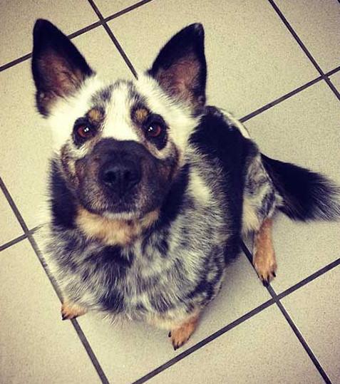 40 Hunde, die ein einzigartiges Fell haben