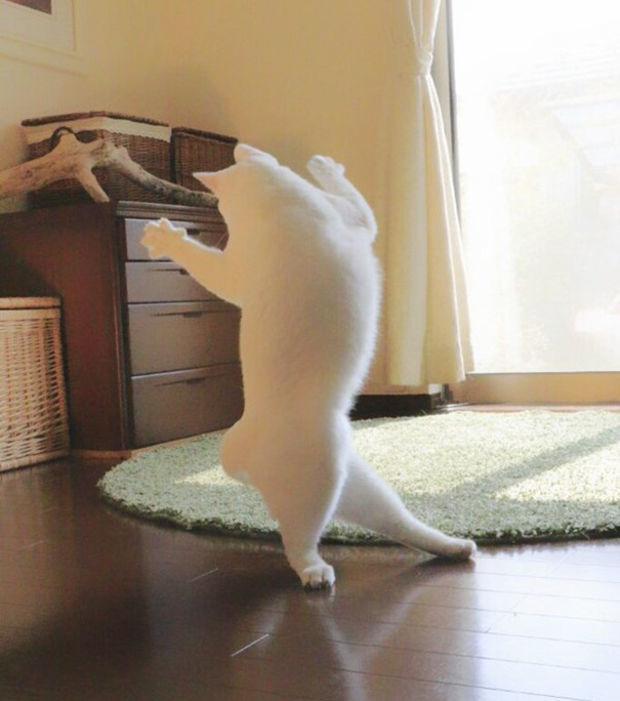 Die Fotos dieser Katze, die sich für eine Ballerina hält, erfreuen die Internetnutzer