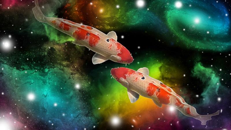 Merkmale des Sternzeichens Fische