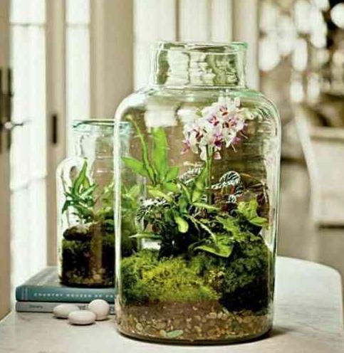 Mit diesen genialen Tricks setzt ihr eure Zimmerpflanzen so richtig schön in Szene!