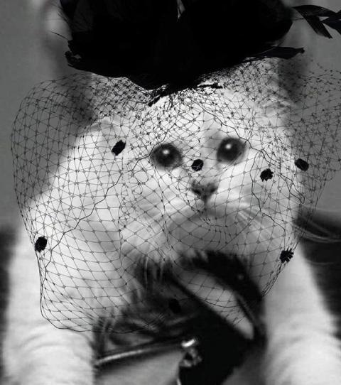 #RIPDaddy: Aus einem bestimmten Grund geht Karl Lagerfelds Katze unter die Modemacher