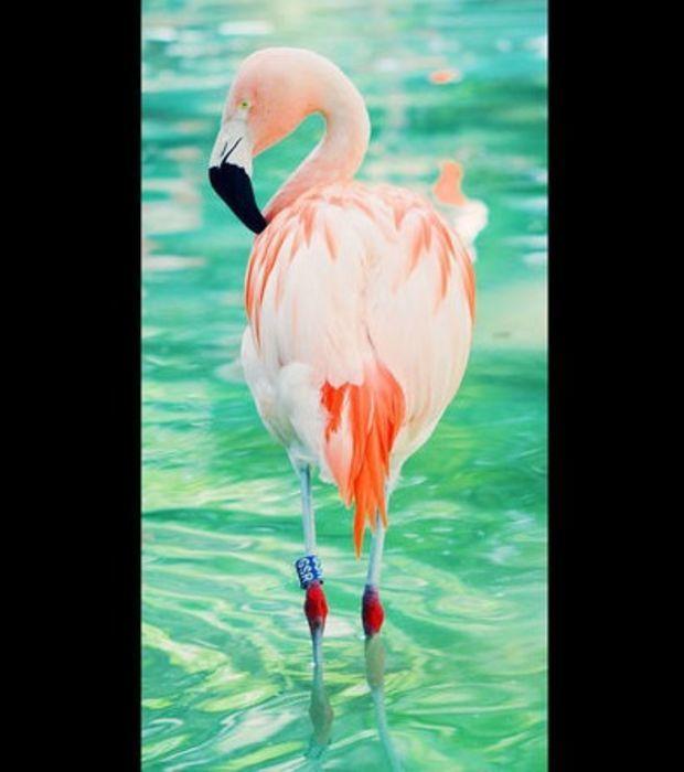 Die schönsten Vögel der Welt