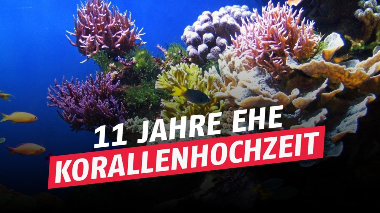 11 Hochzeitstag Korallenhochzeit Geschenkidee Feier Bedeutung